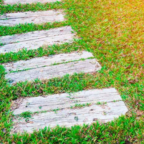 camino-sendero-corto